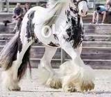 Horse Beauty / Care