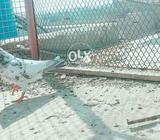 Pigeon pee