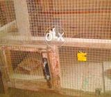 Suitable cage for pigeon chicken etc (wood) hand made